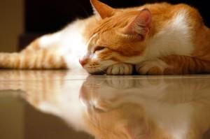 Deep Sleep image